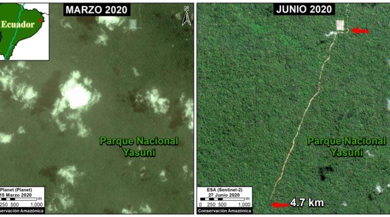 MAAP #117: Nueva Carretera Petrolera en el Parque Nacional Yasuní, hacia la Zona Intangible (Ecuador)